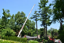 Tree Removal Closter NJ